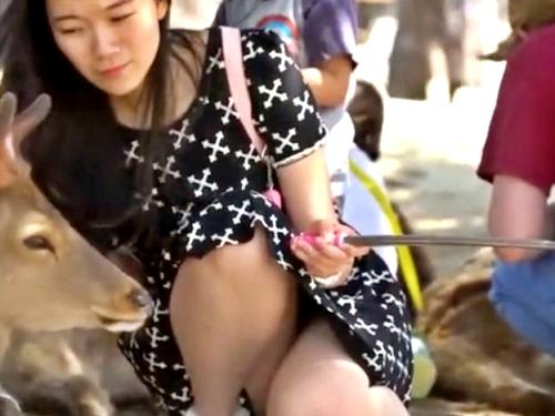 【盗撮】某奈良公園で鹿との自撮りに夢中になっている黒髪清楚系お姉さんのしゃがみパンチラww